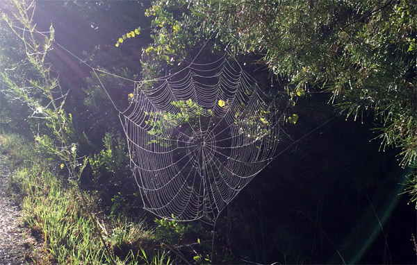 Spider web seen in the rays of sunlight.